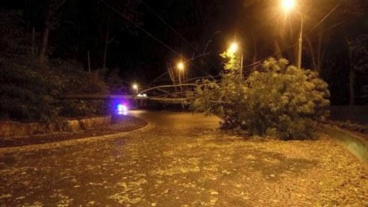 Львовщина пострадала отбури: повалены деревья иоборваны кабеля